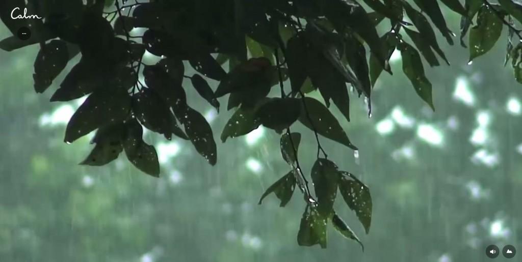 calm-rain